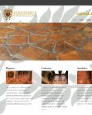 Renaissance+Inc Website